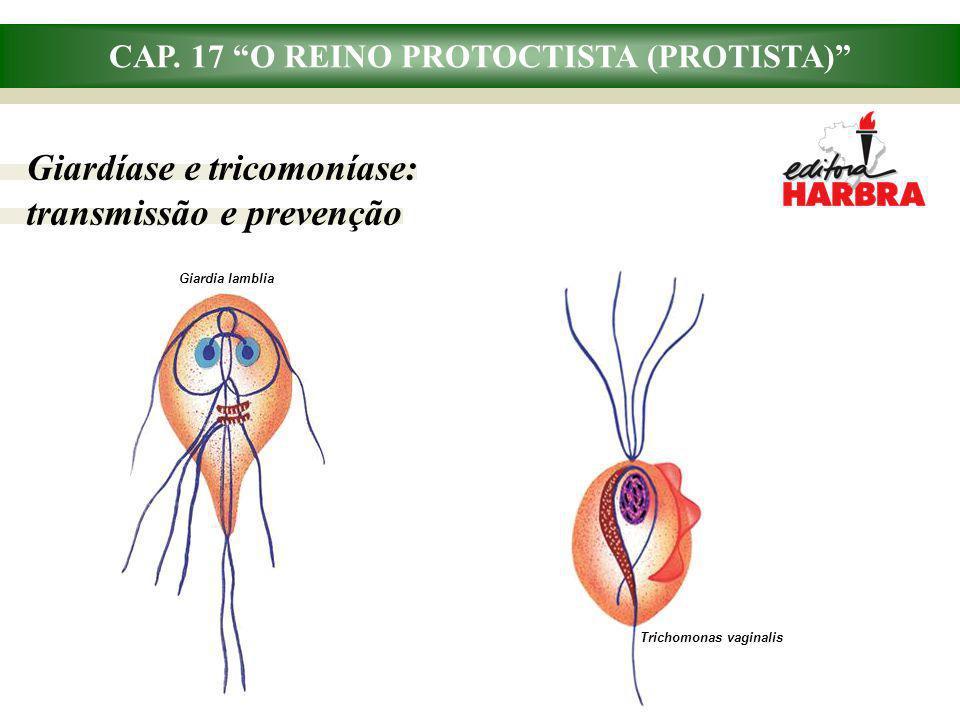 CAP. 17 O REINO PROTOCTISTA (PROTISTA) Giardíase e tricomoníase: transmissão e prevenção Giardia lamblia Trichomonas vaginalis