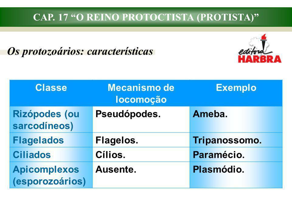 CAP. 17 O REINO PROTOCTISTA (PROTISTA) Os protozoários: características ClasseMecanismo de locomoção Exemplo Rizópodes (ou sarcodíneos) Pseudópodes.Am