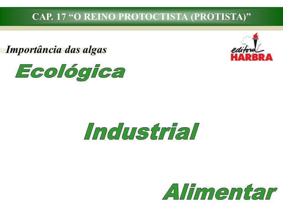 CAP. 17 O REINO PROTOCTISTA (PROTISTA) Importância das algas
