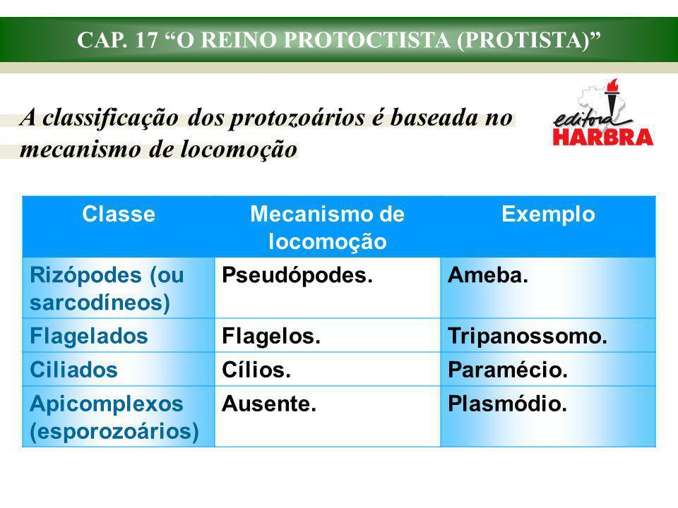 CAP. 17 O REINO PROTOCTISTA (PROTISTA) A classificação dos protozoários é baseada no mecanismo de locomoção ClasseMecanismo de locomoção Exemplo Rizóp