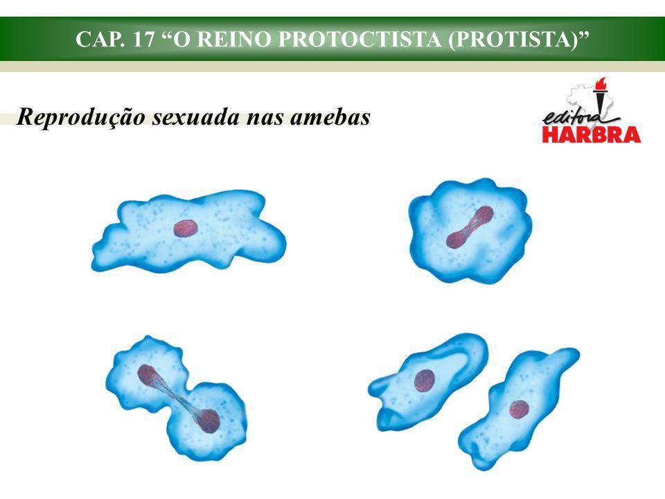 CAP. 17 O REINO PROTOCTISTA (PROTISTA) Reprodução sexuada nas amebas