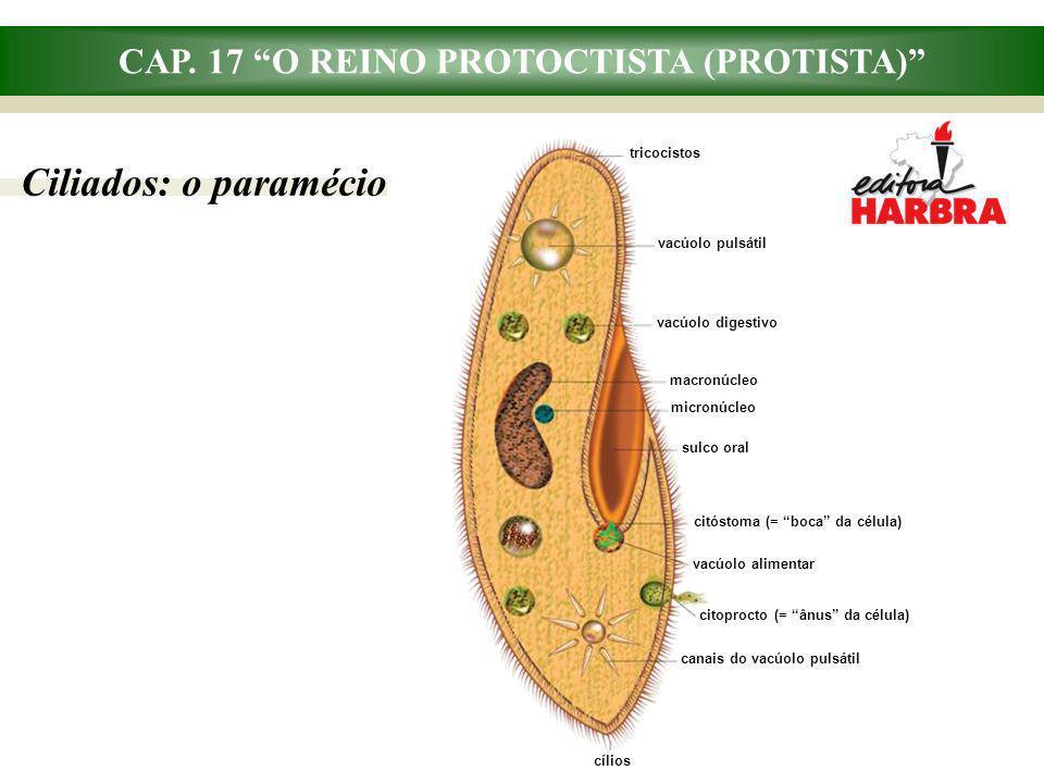 CAP. 17 O REINO PROTOCTISTA (PROTISTA) Ciliados: o paramécio micronúcleo tricocistos macronúcleo vacúolo pulsátil vacúolo digestivo vacúolo alimentar