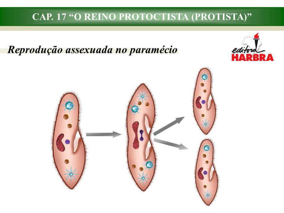 CAP. 17 O REINO PROTOCTISTA (PROTISTA) Reprodução assexuada no paramécio