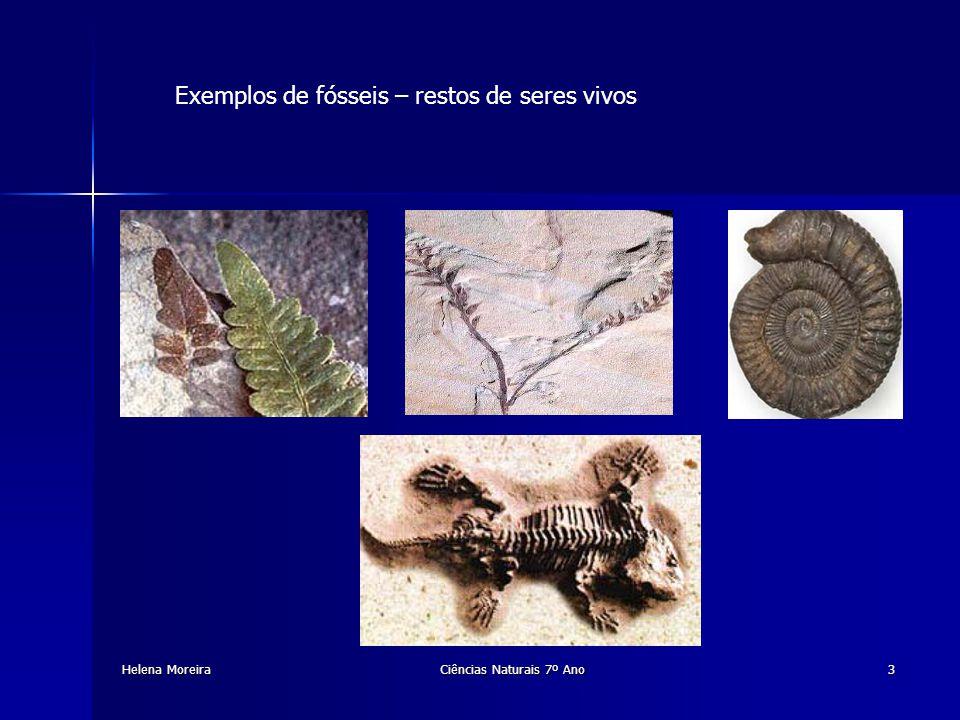 Exemplos de fósseis – marcas ou vestígios de seres vivos Fornecem importantes informações sobre a locomoção, alimentação e reprodução.