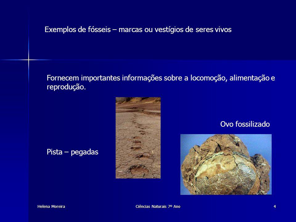 Fossilização É o conjunto de fenómenos físicos e químicos que permitem a formação de um fóssil Helena MoreiraCiências Naturais 7º Ano5