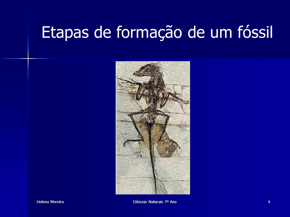 Helena Moreira Ovos fossilizados Ciências Naturais 7º Ano17