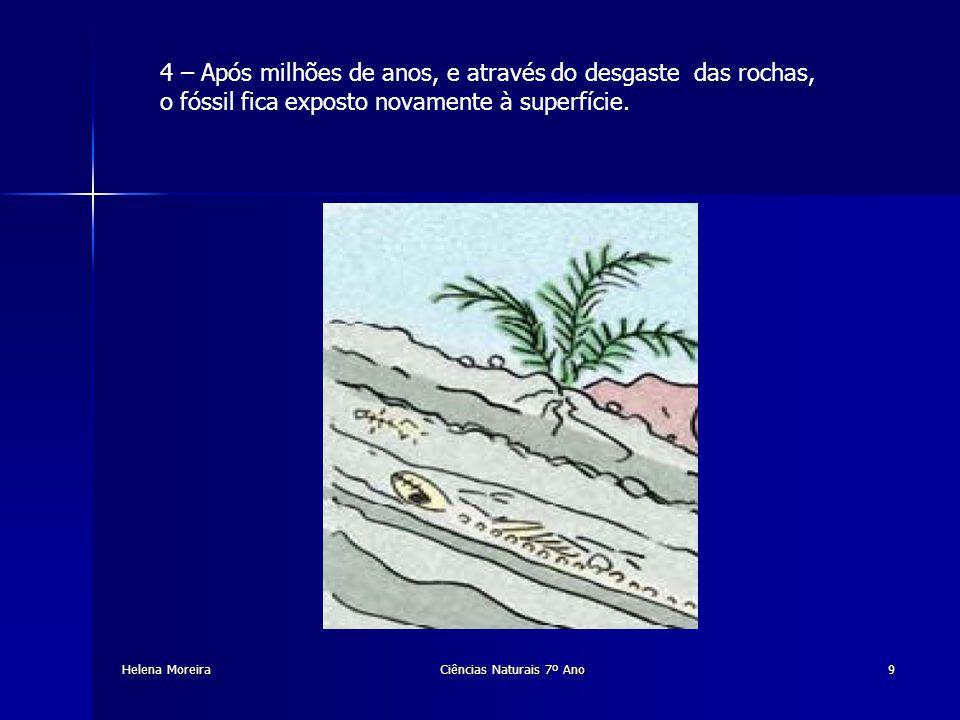 Helena Moreira Fósseis Vivos São seres vivos que existem desde há milhões de anos.