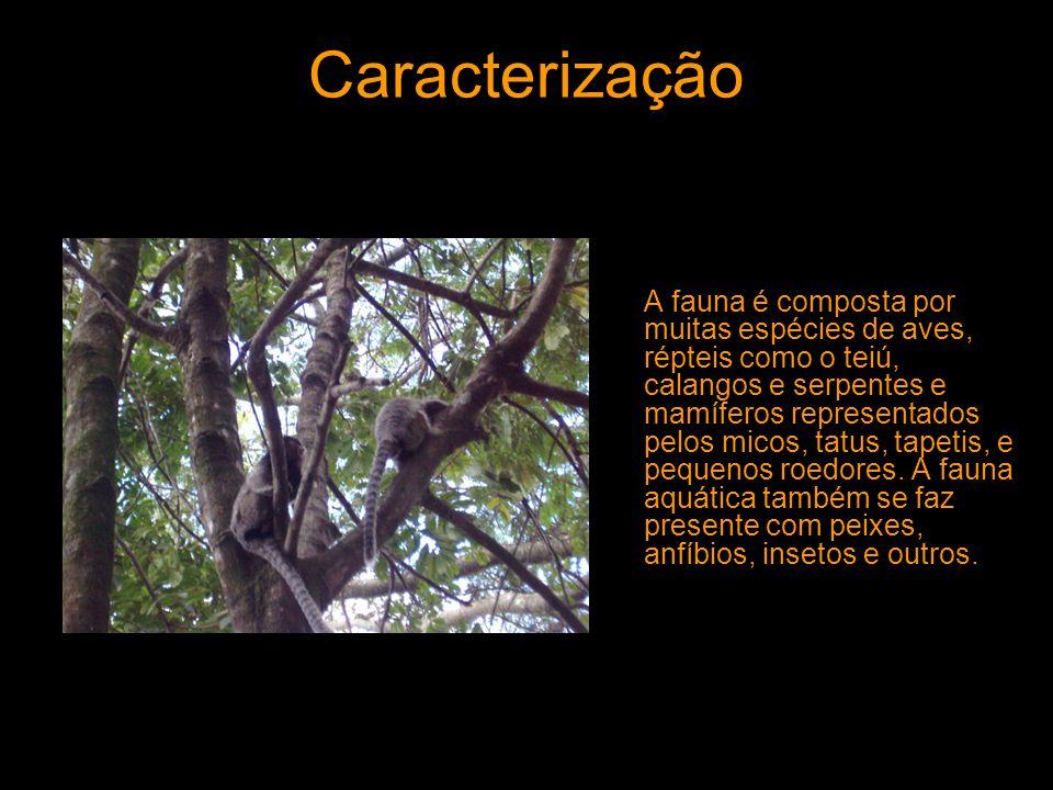Caracterização A fauna é composta por muitas espécies de aves, répteis como o teiú, calangos e serpentes e mamíferos representados pelos micos, tatus,