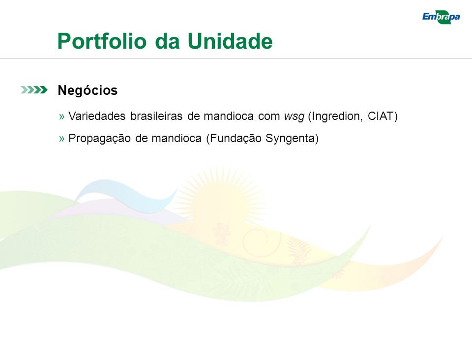 Portfolio da Unidade Negócios » Variedades brasileiras de mandioca com wsg (Ingredion, CIAT) » Propagação de mandioca (Fundação Syngenta)
