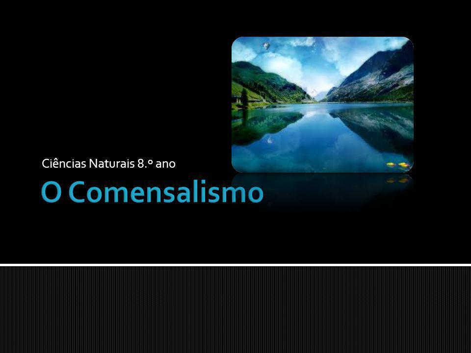 Introdução; O Comensalismo; Exemplos de Comensalismo: Peixe-palhaço/ anémonas-do-mar; Congro/ camarões; Rémoras/ baleias ou tubarões; Epífitas/ plantas.