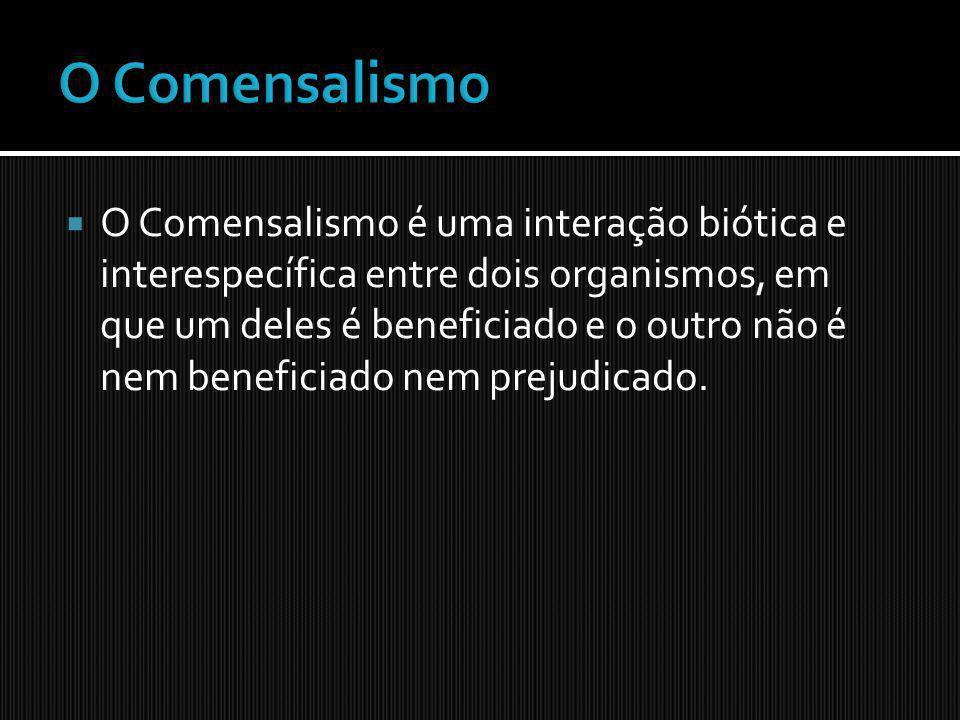 O Comensalismo é uma interação biótica e interespecífica entre dois organismos, em que um deles é beneficiado e o outro não é nem beneficiado nem prej