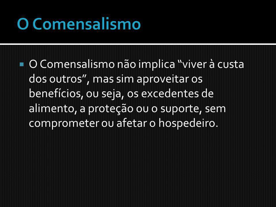 O Comensalismo não implica viver à custa dos outros, mas sim aproveitar os benefícios, ou seja, os excedentes de alimento, a proteção ou o suporte, se