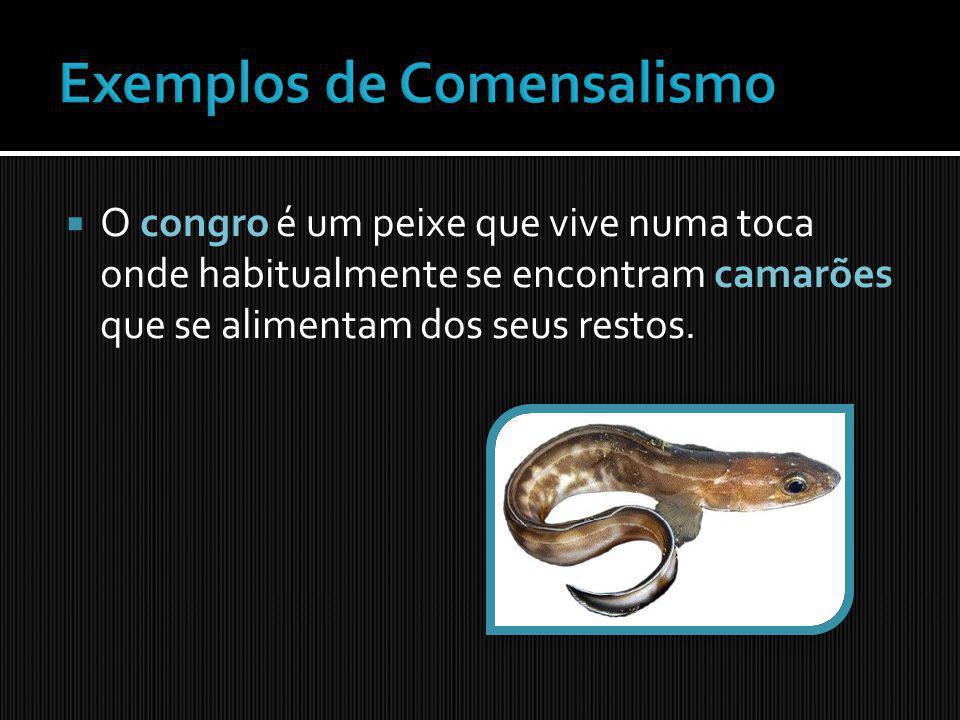 As rémoras são peixes que ficam debaixo das baleias ou até dos tubarões, pois são beneficiadas ao comer os restos da comida destes animais e ficando protegidos de predadores;