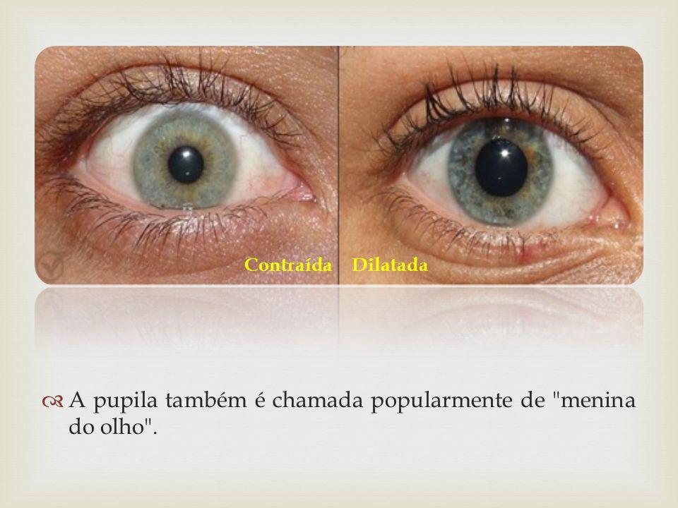 A pupila também é chamada popularmente de menina do olho . ContraídaDilatada