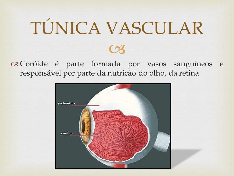 Coróide é parte formada por vasos sanguíneos e responsável por parte da nutrição do olho, da retina. TÚNICA VASCULAR