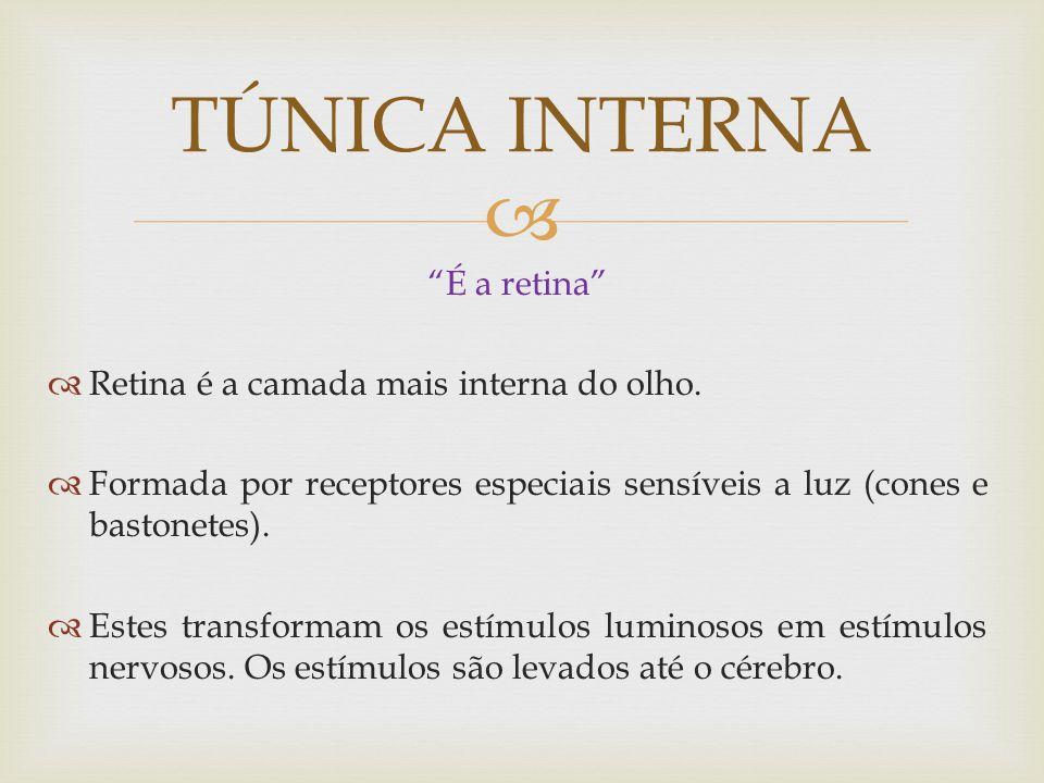 É a retina Retina é a camada mais interna do olho.