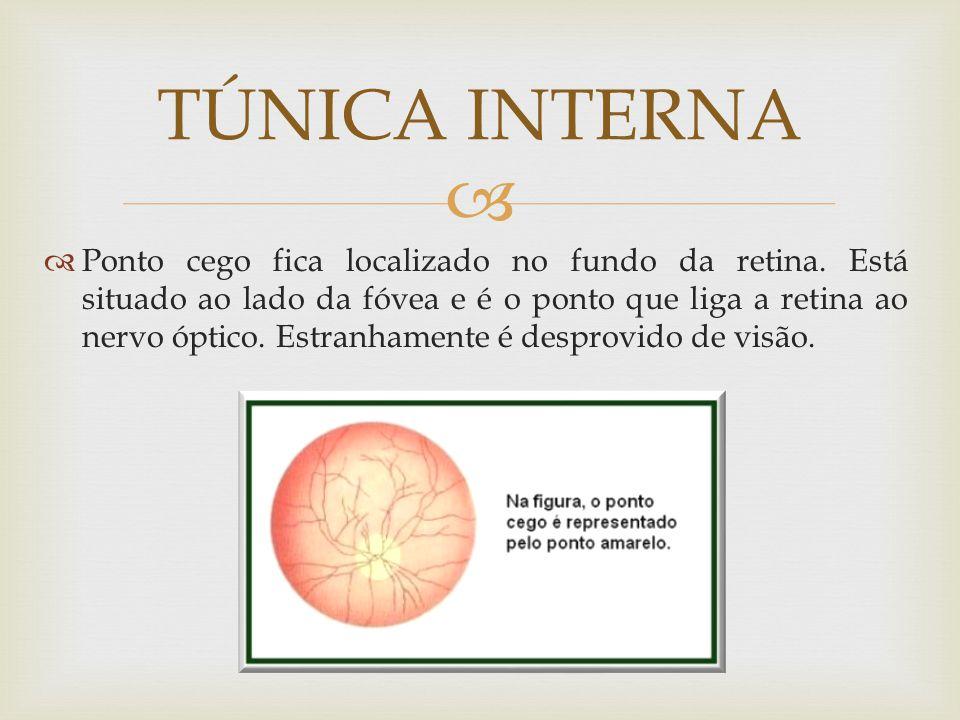 Ponto cego fica localizado no fundo da retina. Está situado ao lado da fóvea e é o ponto que liga a retina ao nervo óptico. Estranhamente é desprovido
