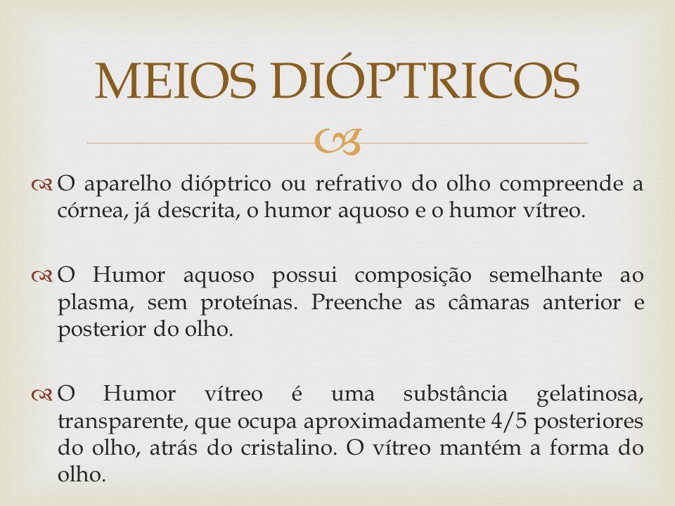 O aparelho dióptrico ou refrativo do olho compreende a córnea, já descrita, o humor aquoso e o humor vítreo.