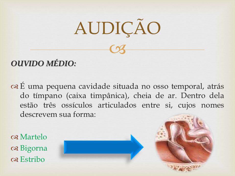 OUVIDO MÉDIO: É uma pequena cavidade situada no osso temporal, atrás do tímpano (caixa timpânica), cheia de ar. Dentro dela estão três ossículos artic