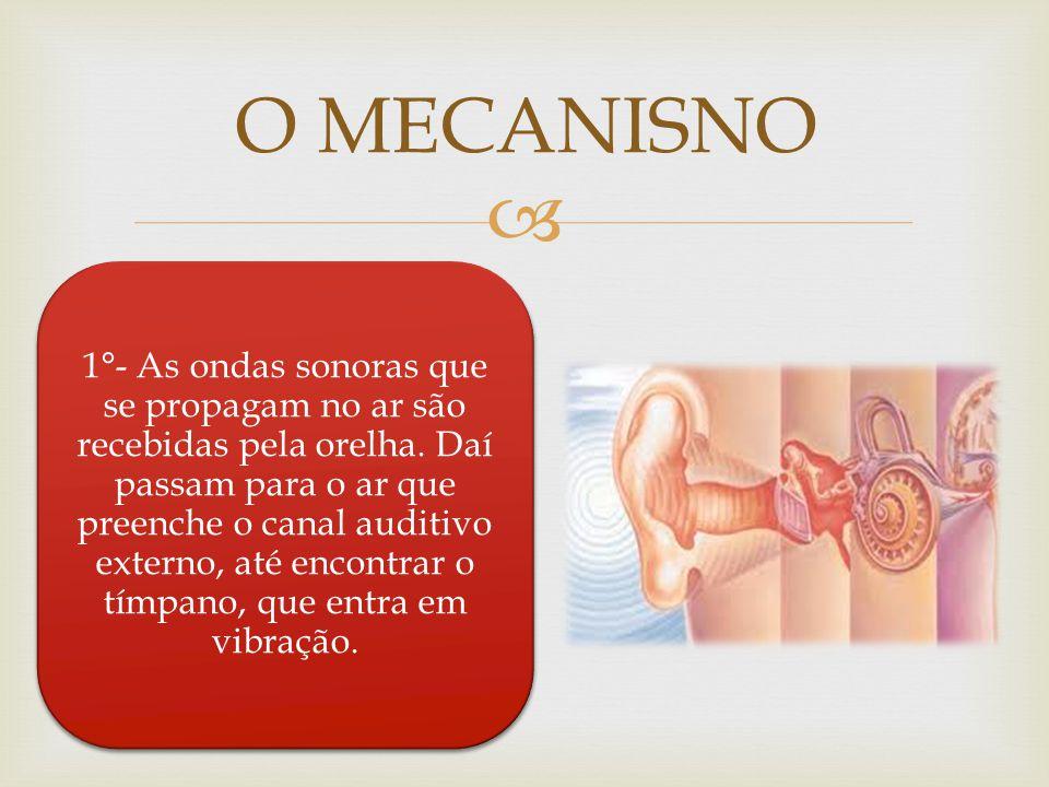 O MECANISNO 1°- As ondas sonoras que se propagam no ar são recebidas pela orelha. Daí passam para o ar que preenche o canal auditivo externo, até enco