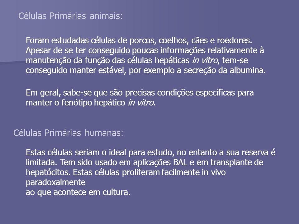 Células Primárias animais: Foram estudadas células de porcos, coelhos, cães e roedores.