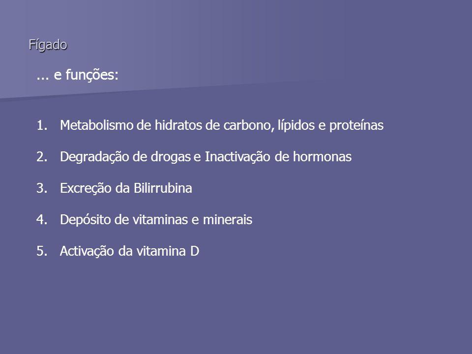 ... e funções: 1.Metabolismo de hidratos de carbono, lípidos e proteínas 2.Degradação de drogas e Inactivação de hormonas 3.Excreção da Bilirrubina 4.