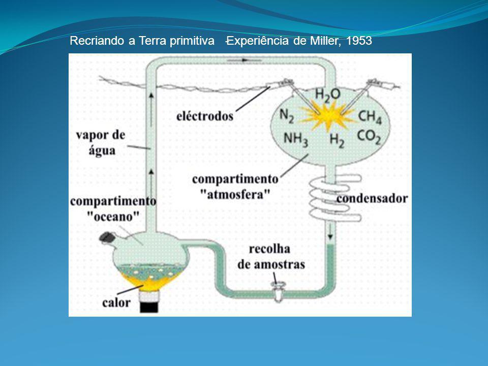 Percentagem de elementos químicos no corpo humano Como é que, a partir destes elementos se podem formar milhares de materiais diferentes?