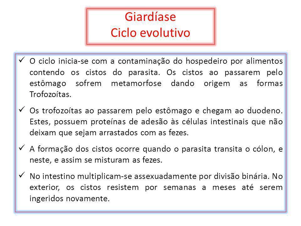 Giardíase Ciclo evolutivo O ciclo inicia-se com a contaminação do hospedeiro por alimentos contendo os cistos do parasita. Os cistos ao passarem pelo