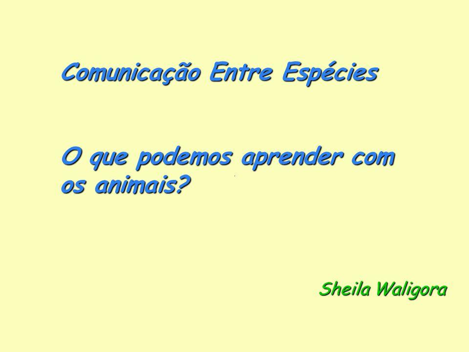 Comunicação Entre Espécies O que podemos aprender com os animais Sheila Waligora Sheila Waligora