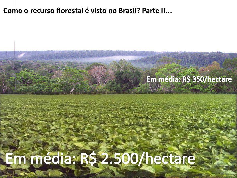 Como o recurso florestal é visto no Brasil? Parte II...