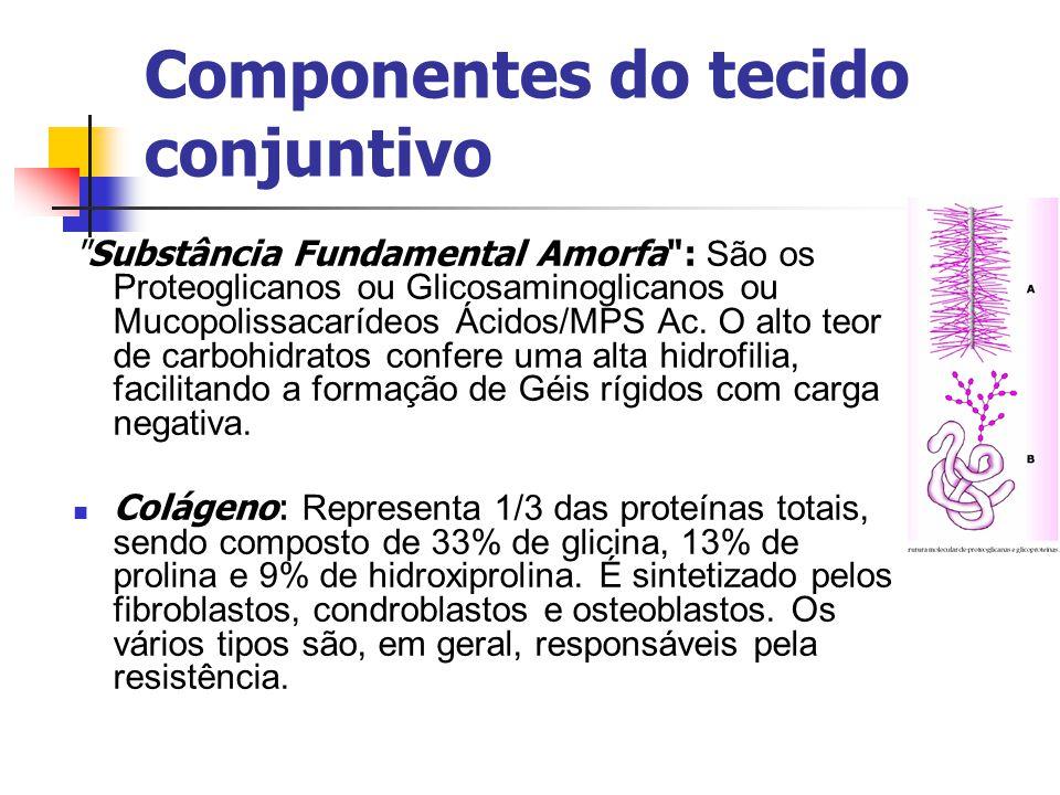 Componentes do tecido conjuntivo Substância Fundamental Amorfa : São os Proteoglicanos ou Glicosaminoglicanos ou Mucopolissacarídeos Ácidos/MPS Ac.