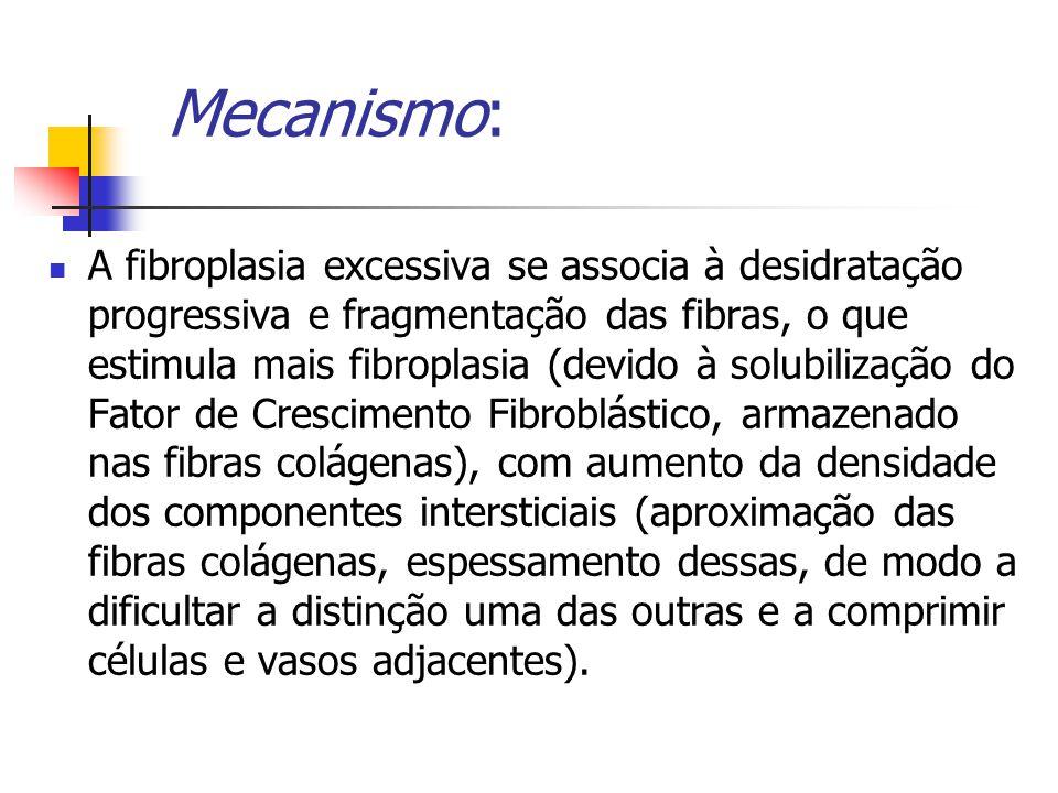 Mecanismo: A fibroplasia excessiva se associa à desidratação progressiva e fragmentação das fibras, o que estimula mais fibroplasia (devido à solubilização do Fator de Crescimento Fibroblástico, armazenado nas fibras colágenas), com aumento da densidade dos componentes intersticiais (aproximação das fibras colágenas, espessamento dessas, de modo a dificultar a distinção uma das outras e a comprimir células e vasos adjacentes).