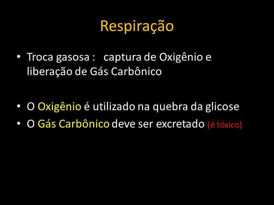 Respiração Difusão Deslocamento dos gases respiratórios do meio ambiente para o corpo e vice-versa.