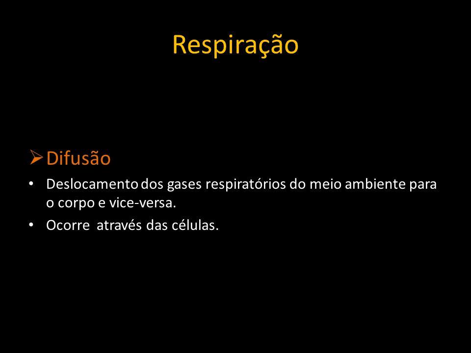 Respiração Traqueal: Insetos Aracnídeos Quilópodes Diplópodes