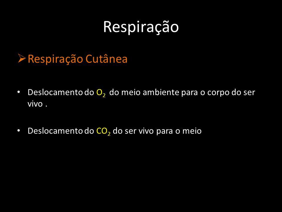 Cutícula O2O2 CO 2