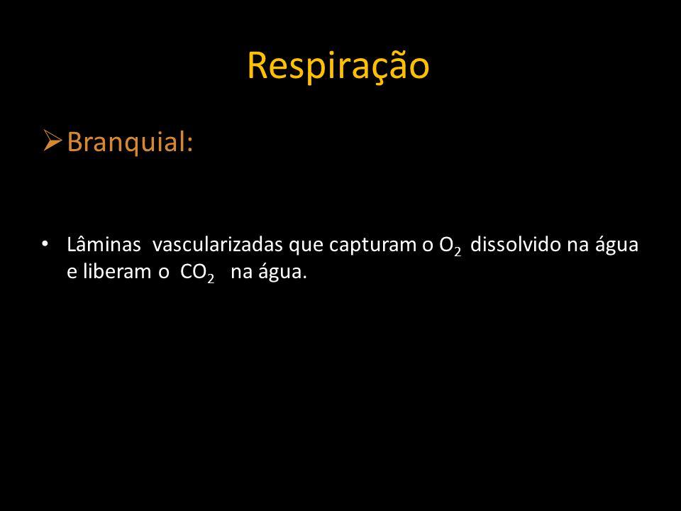 Vasos sanguineos Brânquias O2O2 CO 2