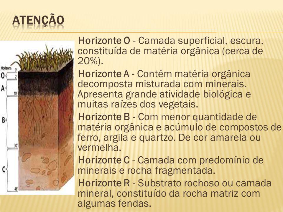 Horizonte O - Camada superficial, escura, constituída de matéria orgânica (cerca de 20%). Horizonte A - Contém matéria orgânica decomposta misturada c