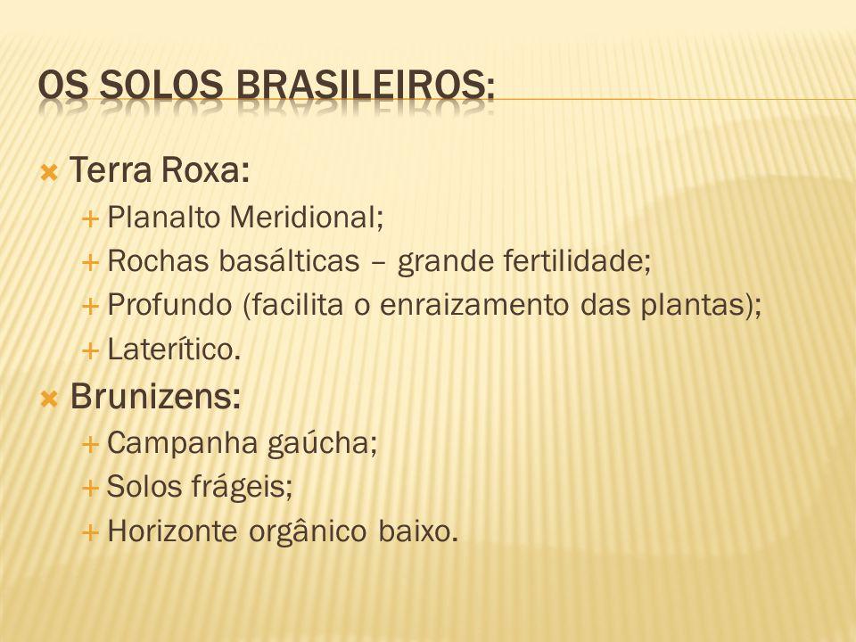 Terra Roxa: Planalto Meridional; Rochas basálticas – grande fertilidade; Profundo (facilita o enraizamento das plantas); Laterítico. Brunizens: Campan