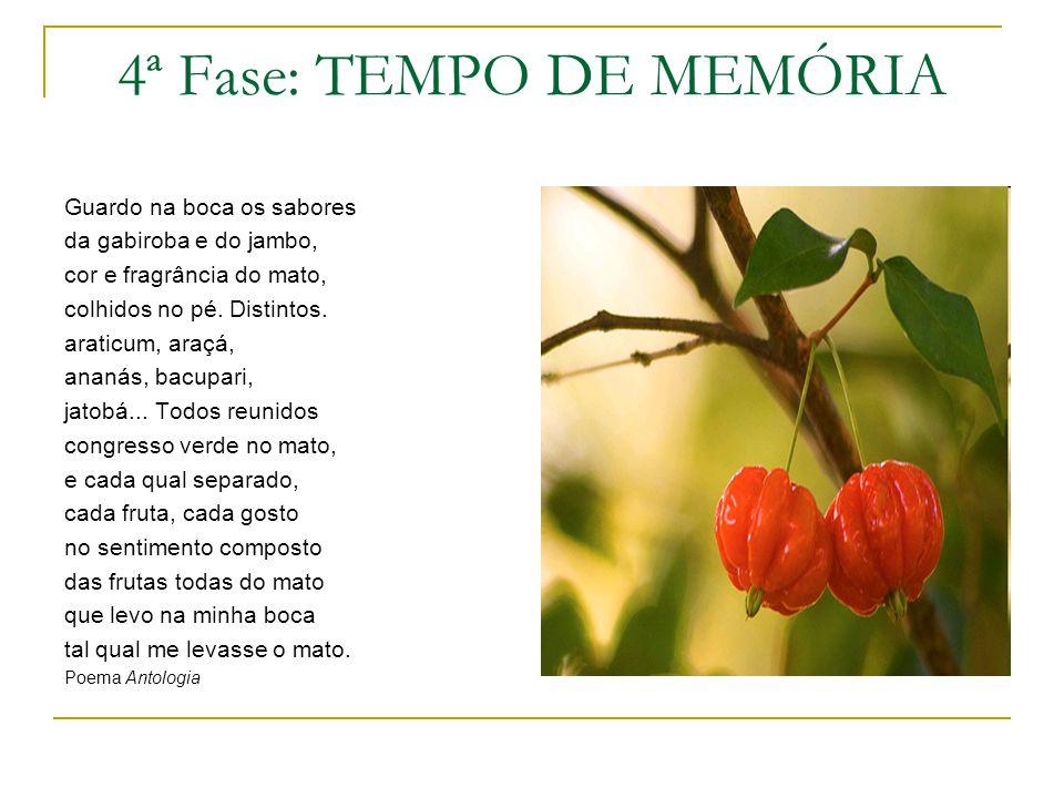 4ª Fase: TEMPO DE MEMÓRIA Guardo na boca os sabores da gabiroba e do jambo, cor e fragrância do mato, colhidos no pé. Distintos. araticum, araçá, anan