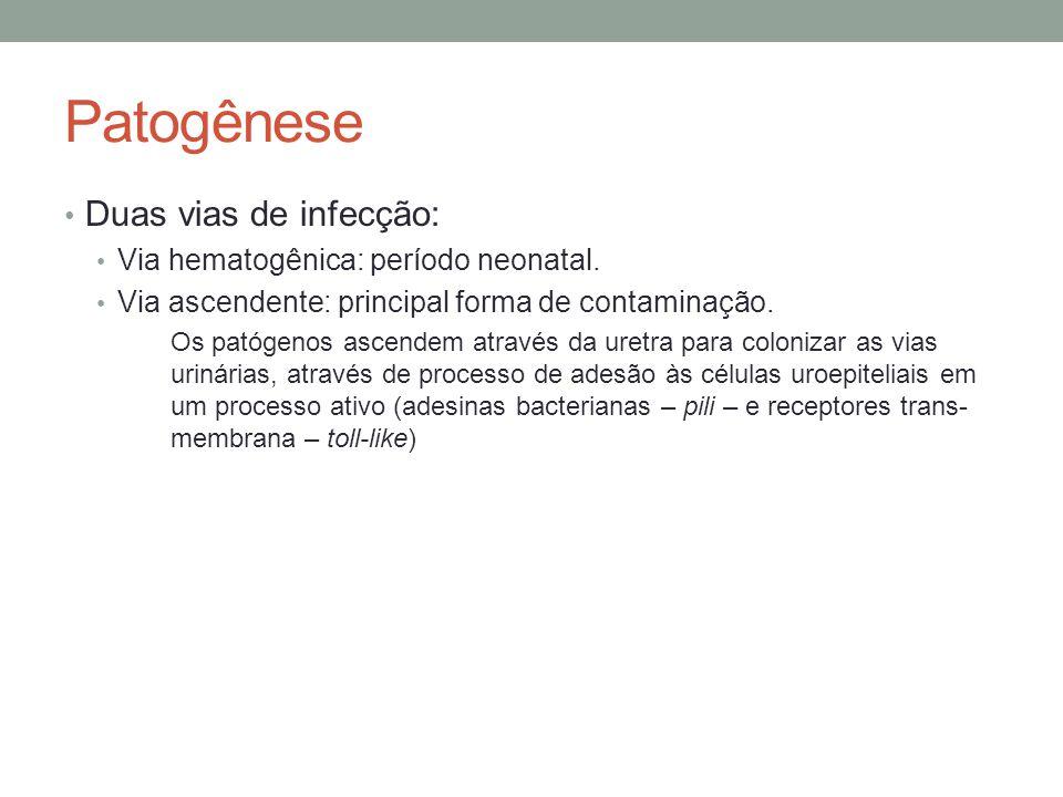 Patogênese Duas vias de infecção: Via hematogênica: período neonatal. Via ascendente: principal forma de contaminação. Os patógenos ascendem através d