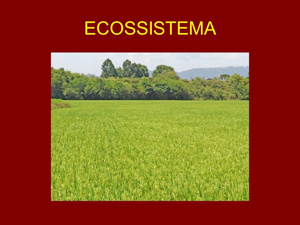 RECURSO NATURAL ÁGUA Pontos fortes: Abundância.Distribuição homogênea.