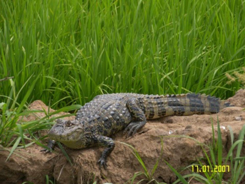 Legislação: proteção da fauna e flora.