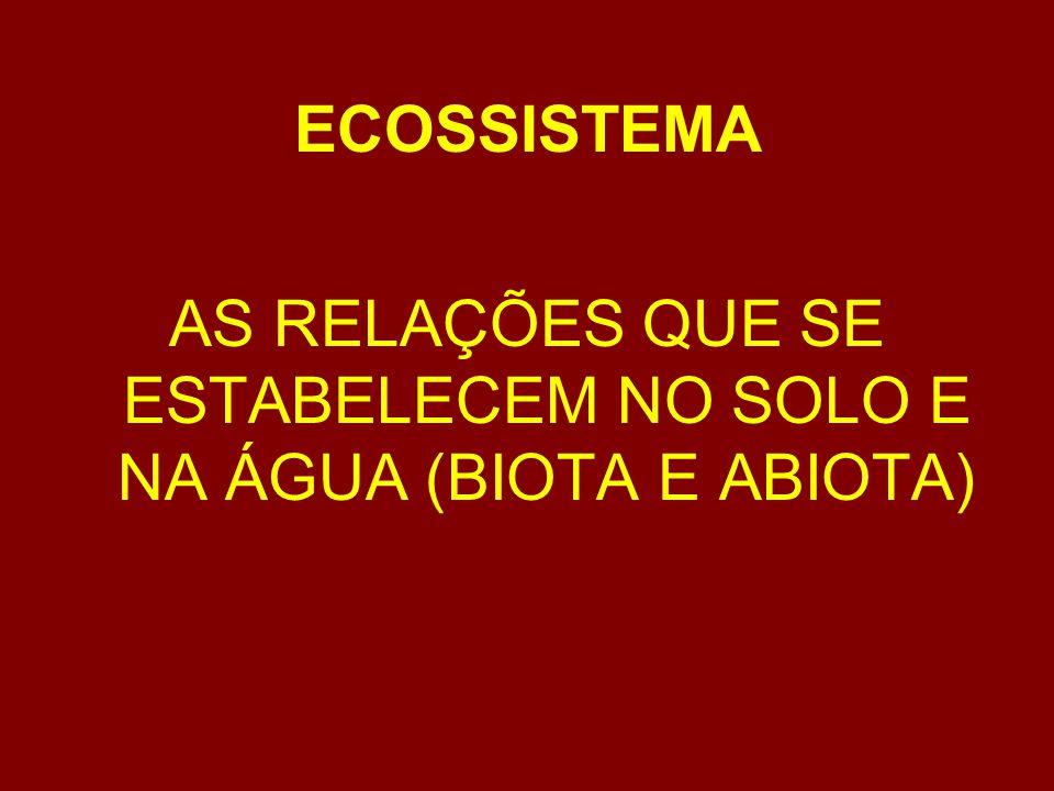 SUSTENTABILIDADE DO ECOSSISTEMA A biodiversidade é extremamente dependente do recursos naturais e é modulada pela quantidade de energia encontrada em cada ecossistema.