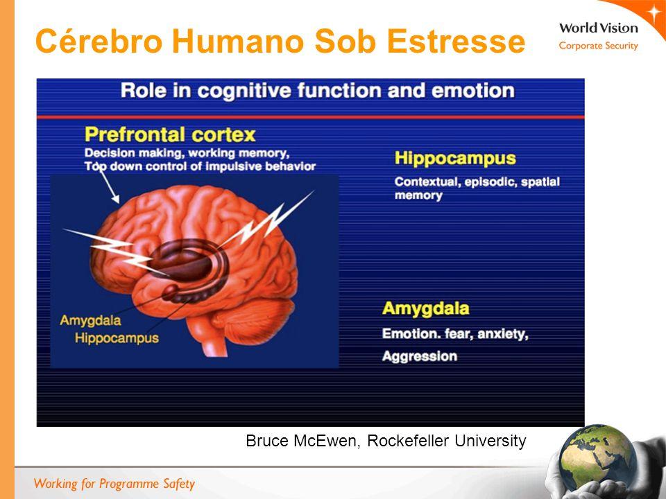 B Bruce McEwen, Rockefeller University Cérebro Humano Sob Estresse