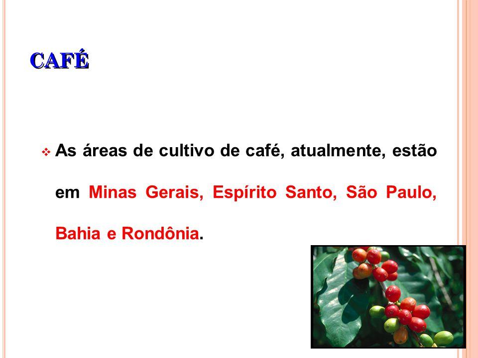 CAFÉ As áreas de cultivo de café, atualmente, estão em Minas Gerais, Espírito Santo, São Paulo, Bahia e Rondônia.