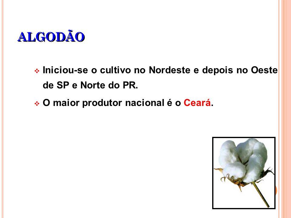 ALGODÃO Iniciou-se o cultivo no Nordeste e depois no Oeste de SP e Norte do PR. O maior produtor nacional é o Ceará.