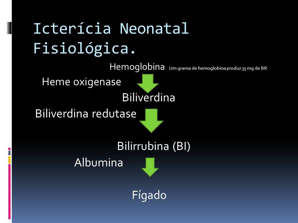 Icterícia Neonatal Fisiológica. Hemoglobina Um grama de hemoglobina produz 35 mg de BR Heme oxigenase Biliverdina Biliverdina redutase Bilirrubina (BI