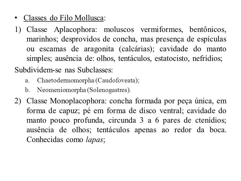 Classes do Filo Mollusca: 1)Classe Aplacophora: moluscos vermiformes, bentônicos, marinhos; desprovidos de concha, mas presença de espículas ou escama