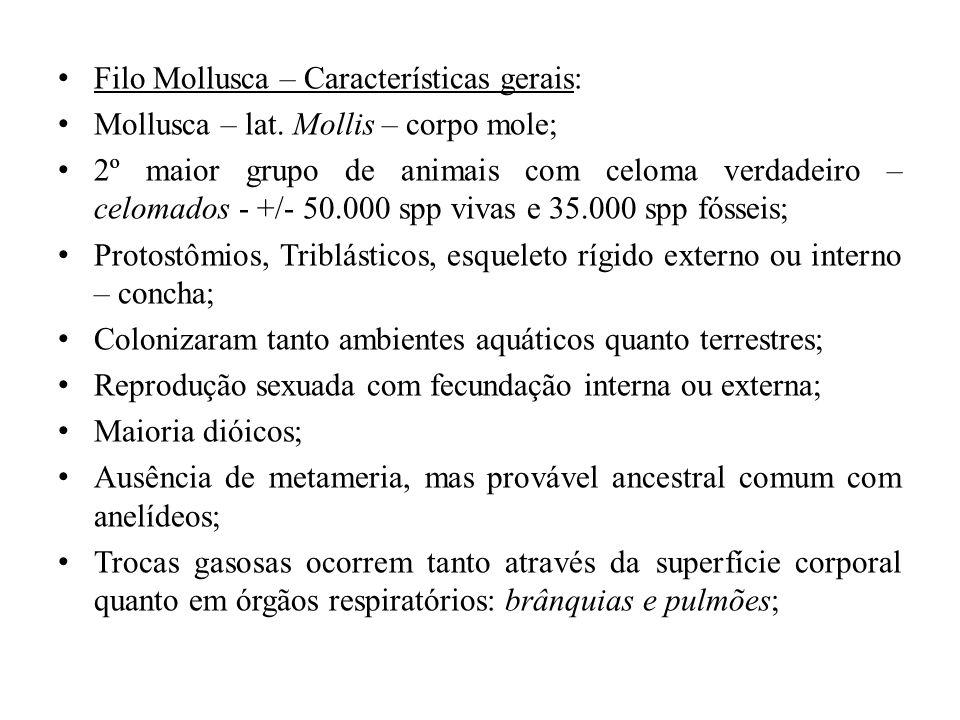 Filo Mollusca – Características gerais: Mollusca – lat. Mollis – corpo mole; 2º maior grupo de animais com celoma verdadeiro – celomados - +/- 50.000