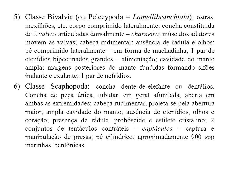 5)Classe Bivalvia (ou Pelecypoda = Lamellibranchiata): ostras, mexilhões, etc. corpo comprimido lateralmente; concha constituída de 2 valvas articulad